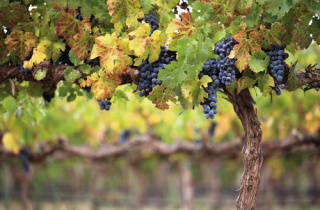 Moldovan wine investing to compete, with the help of EU4Business