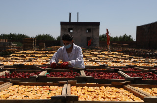 Developing Food Safety Enforcement in Armenia with European Union's EU4Business Initiative